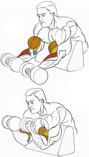 Как накачать бицепсы в домашних условиях гантелями и турником 34