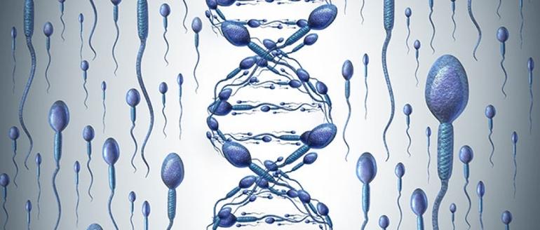 Методика определения дефрагментации днк спермограммы