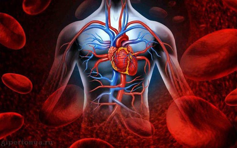 Улучшение состояния сердечно-сосудистой системы