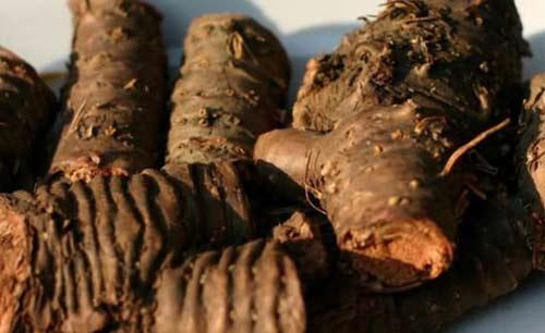 Золотой корень - лечебные свойства и противопоказания ✿ Народная медицина, травы, рецепты