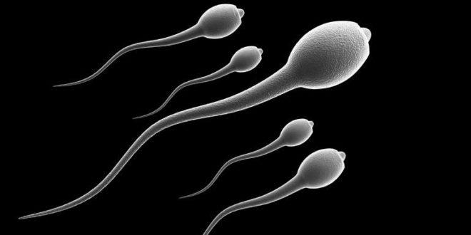 От чего зависит скорость сперматозоидов